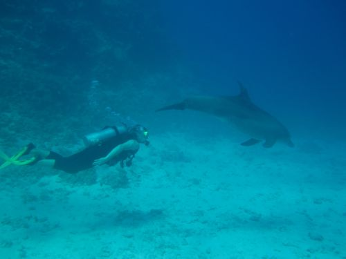 Pat Swimming with Dolphin