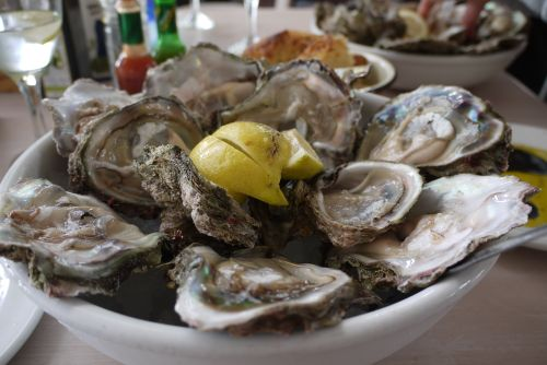 Knysna – Oysters Closeup