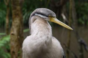 Australia Zoo 1, Australia (Photos)