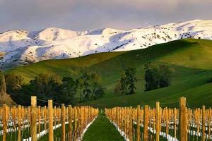 Marlborough Valley, New Zealand