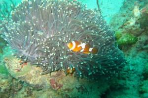 Koh Phi Phi, Thailand – Scuba Diving