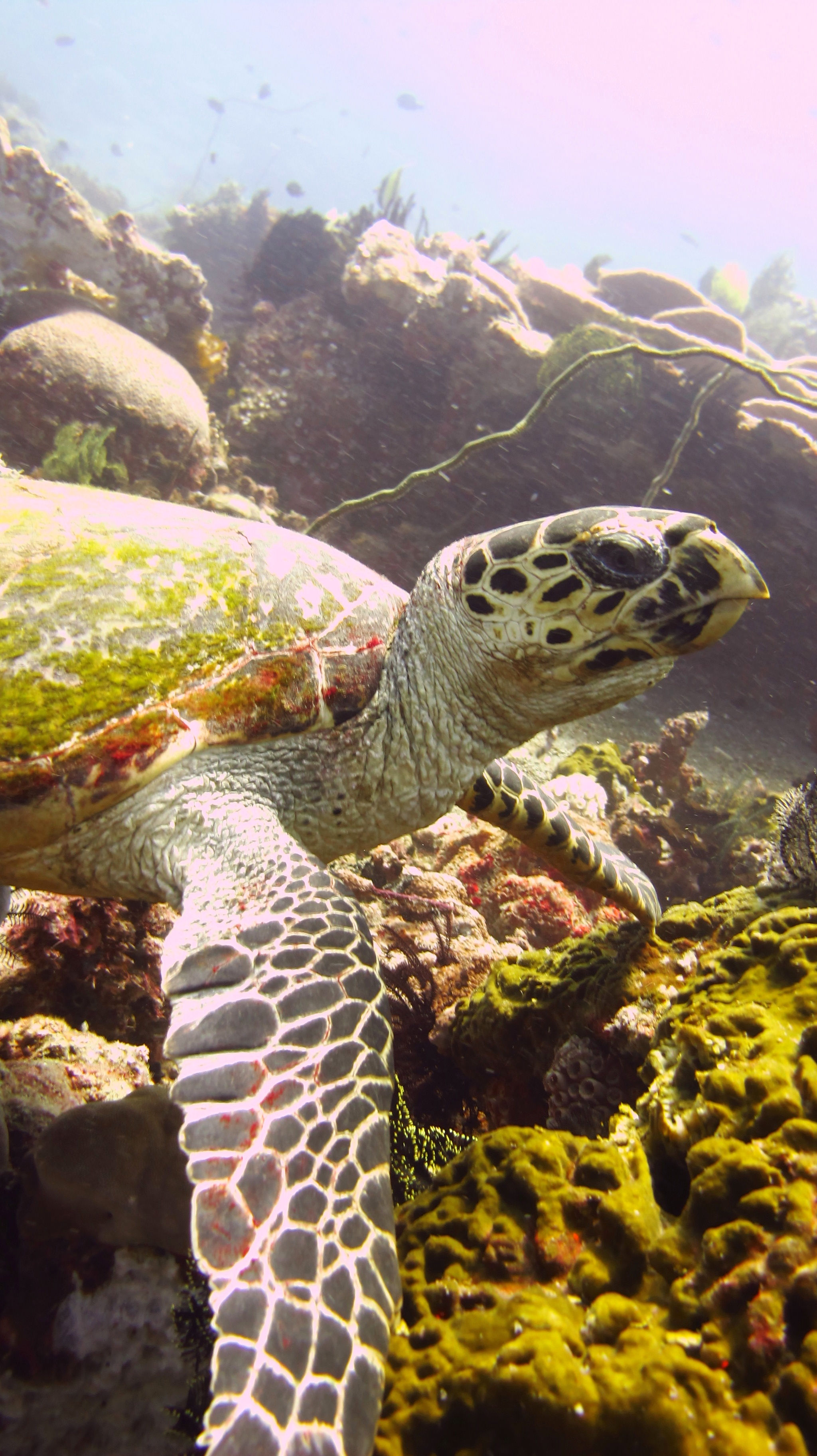 do sea turtles make good pets?